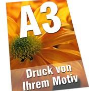 Plakate DIN  A3 135g Bilderdruck 4/0-farbig