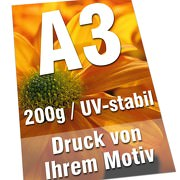 Plakate DIN A3 200g Posterdruck 4/0-farbig UV-stabil Poster